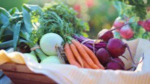 Grönsaker-frukt